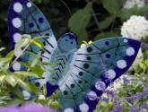 Workshop vlinders voor minimaal 4 personen